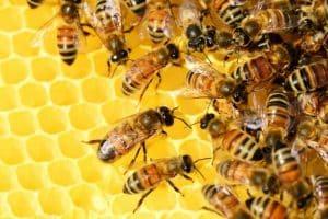As abelhas nunca param!