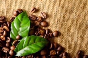 Receita com a exportação dos Cafés do Brasil totaliza US$ 3,2 bilhões entre janeiro e julho de 2021