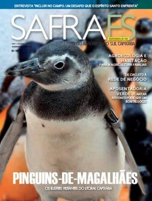 Pinguins-de-magalhães