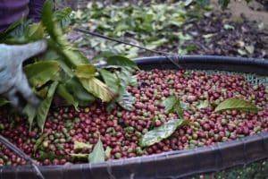 Concurso Coffee of The Year 2021 está com inscrições abertas; saiba como participar