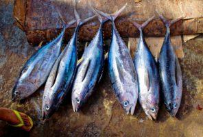 Fábrica de atum em Itapemirim conquista selo e pode vender pescados para todo o ES