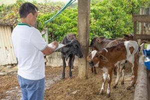 Idaf prepara concurso para médicos-veterinários com salário a partir de R$ 5,4 mil