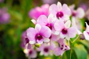 Feira em Vitória terá espaço com exposição de flores e orquídeas