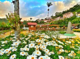 Sebrae/ES oferece oficina de arte floral em Santa Teresa