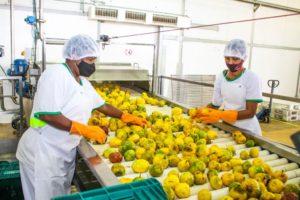 Agro Trop, em Linhares, entrega primeiro lote de produção