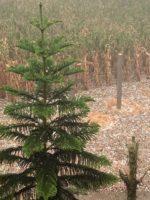 """Prejuízo foi menor do que a gente esperava"", diz produtor de Santa Leopoldina após chuva de granizo"