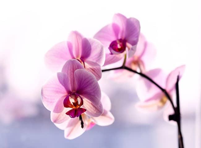 Cariacica: evento terá exposições de orquídeas, flores, arranjos, cactos e afins