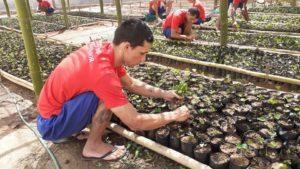 Mudas de café conilon são produzidas por unidade prisional de Viana