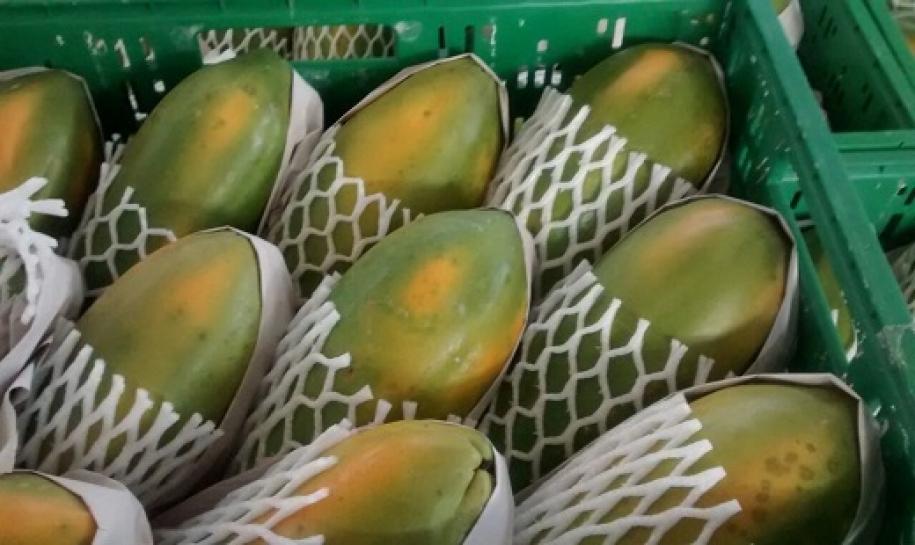 Mamão formosa se valoriza mais de 107% no norte do ES