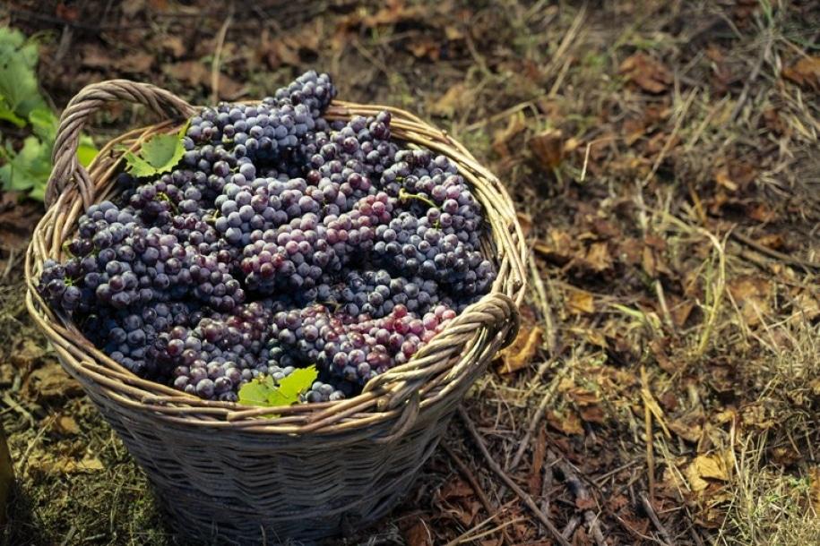 Sistema permite cadastro e análise de dados de produtores de uva e vinho do país