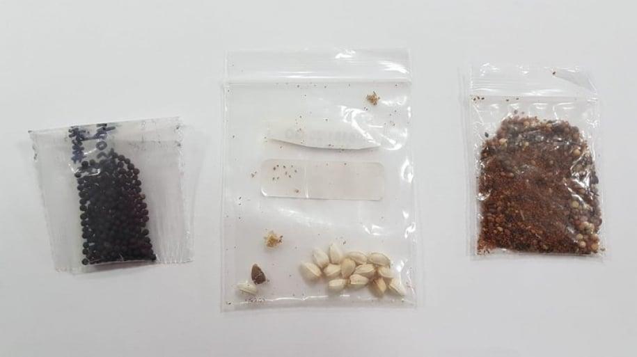 Identificada presença de fungos, bactérias e ácaro em pacotes de sementes não solicitados